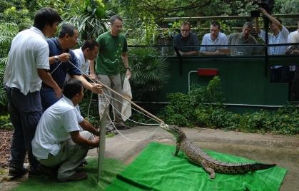 Relocation of Pui Pui to Hong Kong Wetland Park